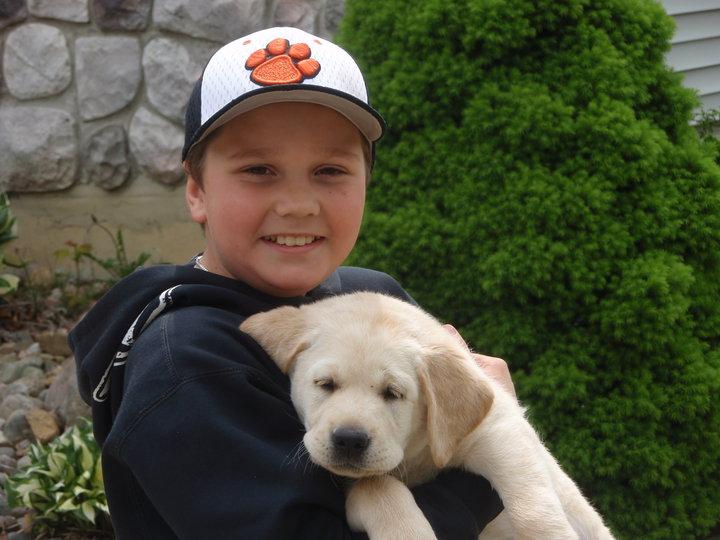 Labrador retriever puppy michigan